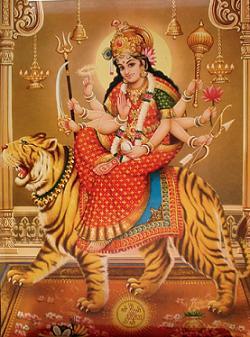 Animals in Indian Culture create an `inclusive universe`
