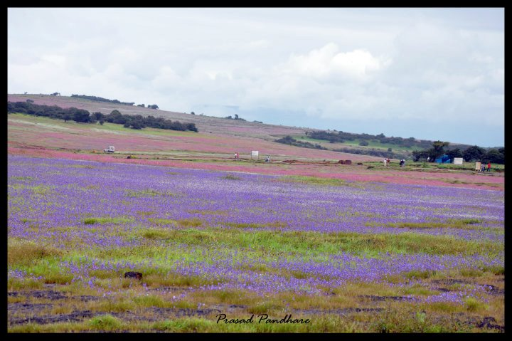 Kaas Plateau of Flowers