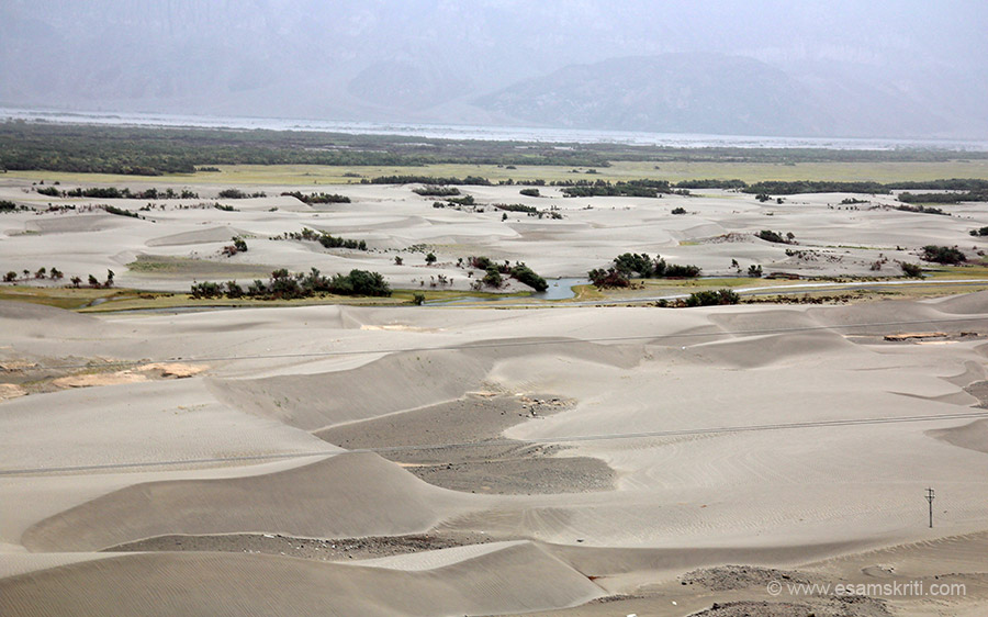 Sand Dunes Nubra Valley